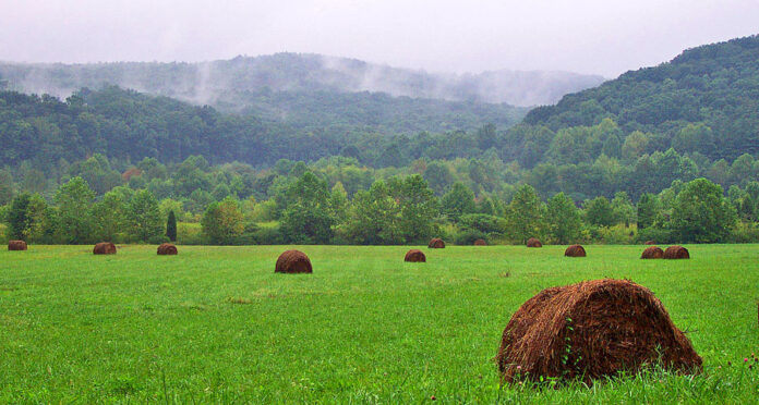 Why is Agriculture Important ? - Agriculture Goods