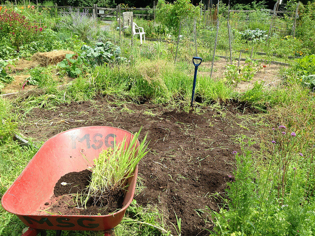 Remove Existing Grass With Roots