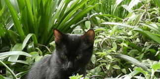 Cats for Gardening