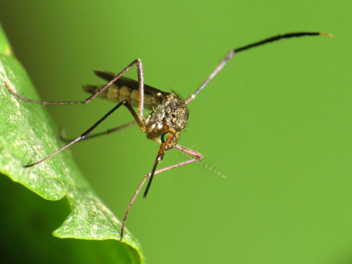 Organic Ways To Get Rid Of Mosquitoes Agriculture Goods