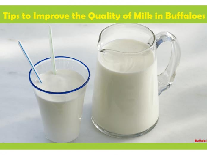 Milk in Buffaloes