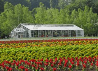 Green House Farming