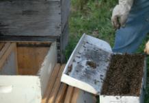 Commercial Beekeeping