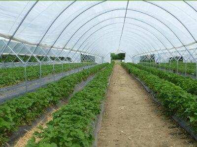 Poly House Farming