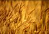 Agri Farming