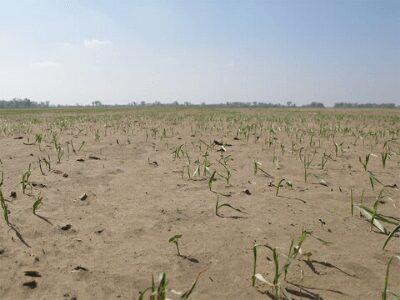 Silt Soil Croping