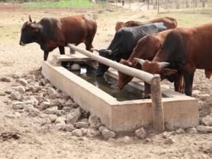 livestock sectors