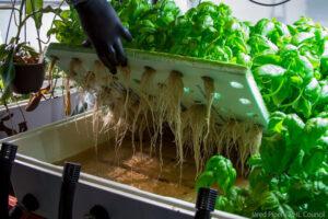 vertical herb farming