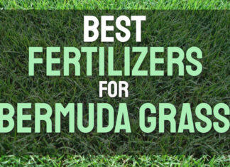 Best Fertilizers for Bermuda Grass