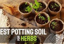 Best Potting Soil for Herbs