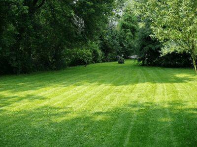 Lawn Fertilize